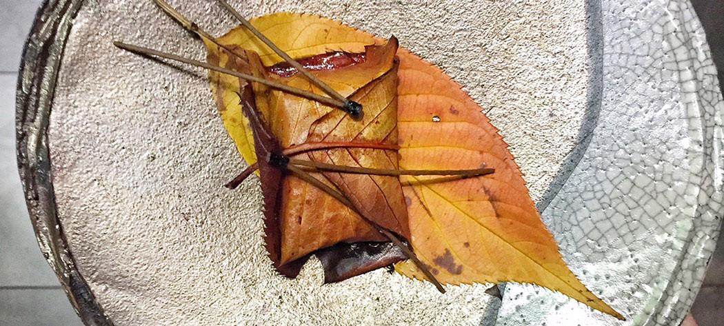 leaf_salmon