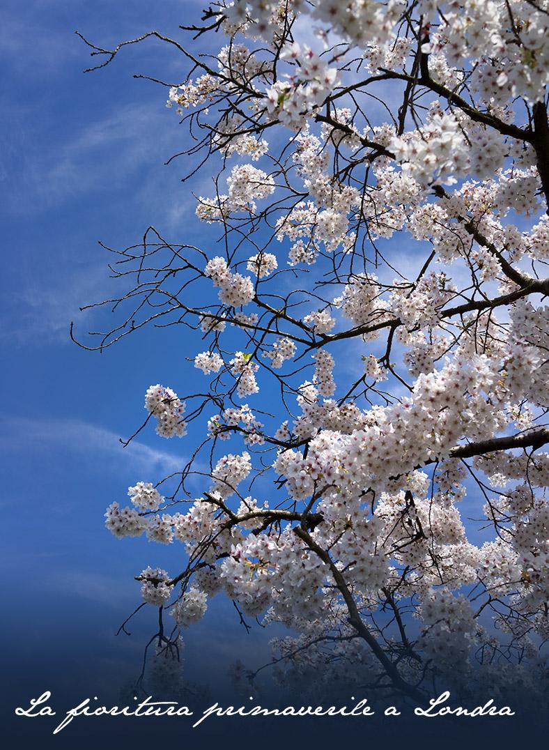 primavera_londra