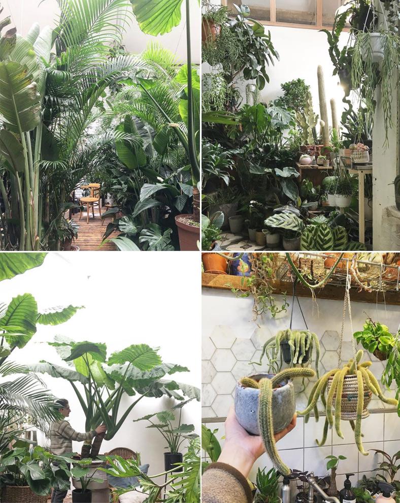 hackney_plant_shop